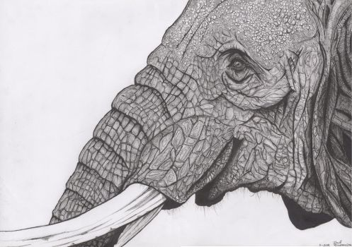 Trunk and Tusks by brasman