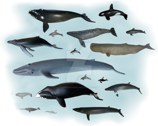 Cetacea - whales (toy) by AgnessAngel