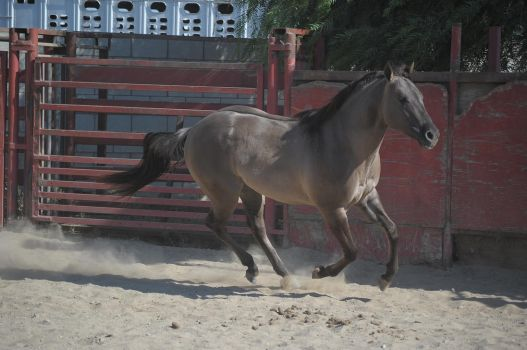 DWP FREE HORSE STOCK 271 by DancesWithPonies