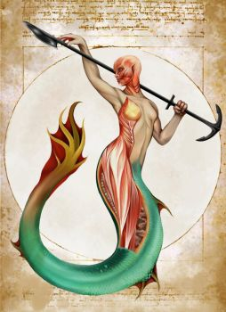 Mermaid Anatomy- Natural History of the Fantastic by Christopher-Stoll