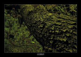 nature 08 by Illusion-Industries