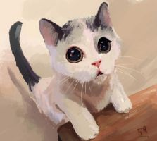 Cat by Daniell86