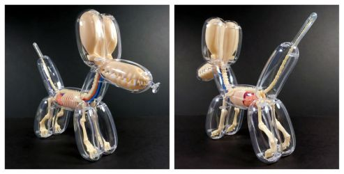 Balloon Dog Anatomical Model by freeny