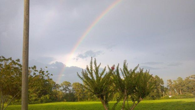 Rainbow in the Trees by PoisonGirl53