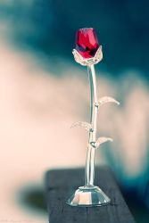 The Glass Rose by MarcoHeisler