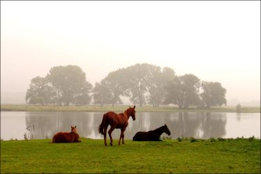 Horses in Morning Mist... by MichiLauke