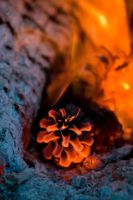 Burning pine cone by Paladin27
