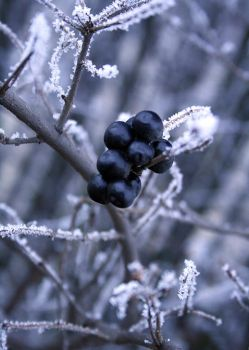 The fruit of winter by blessedchild