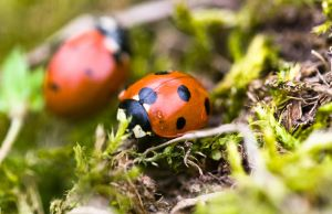 2 lady bugs by ervin21