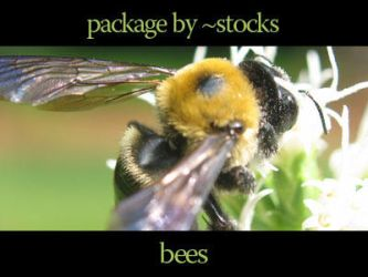 stocks-249-pack of bees by stocks