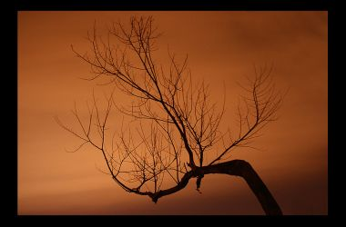 the hanging tree by sassmuffin