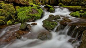 Sol Duc Creek Cascades by La-Vita-a-Bella