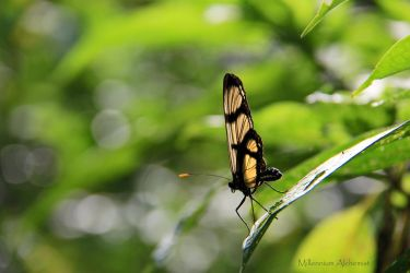 Mariposa by MyPhotoParadise
