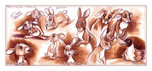 Watership Down by KatCardy