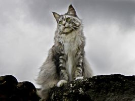 ...........My cat by Flore-stock