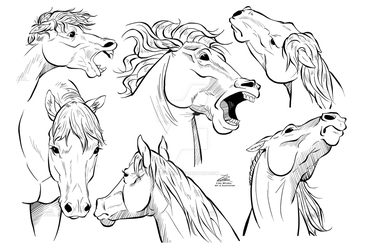 Horse Head studies - Inked by LeoMitchell