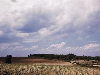 Corn field, Ga LOC 1941 by makepictures