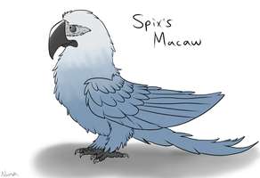 Spix's Macaw (NLOTGW style)  by GreenWingSpino32