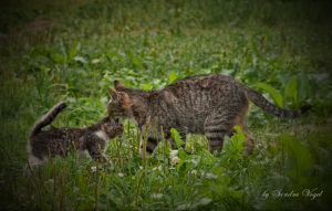 cat s tendernesses by DerDunkleEngel