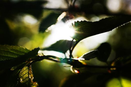 Leaf and lensflare by stofo