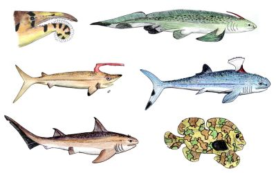 Olds Sharks by PaleoAeolos