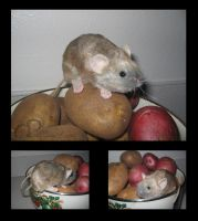 Mouse Plushie - House Mouse by Morumoto