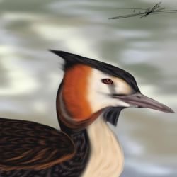 Great crested grebe by fluffygaykitties