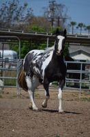 DWP FREE HORSE STOCK 41 by DancesWithPonies