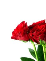 The red red roses by Tricia-Danby