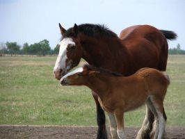 Mare and Foal by okbrightstar-stock