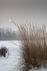 Reaching for the sun (on a winter foggy day) by Nikonoclaste