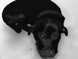 Black Dog by JillySB