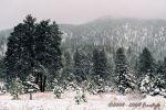 Winter Post Card II by Freestyle35mm