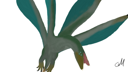 Tetrapteryx magnificens by sphenaphinae