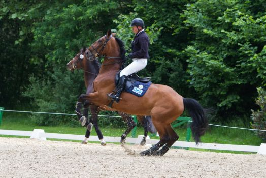 Horse Bolting Disobedience Prep Arena 4 by LuDa-Stock
