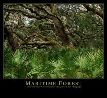 Maritime Forest by Isquiesque