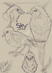 Sketch Page 03: Sky by Blacktiger5