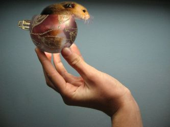Miniature Giant Xmas Hamster by Paradox-Of-Duality
