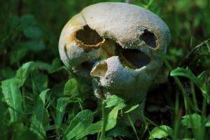 Aftermath of a Lycoperdon by organicvision