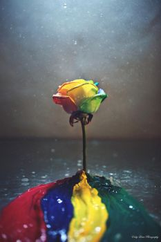 In Rainbows by MyLifeThroughTheLens
