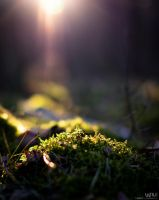 Hills of Moss by Lasiu7