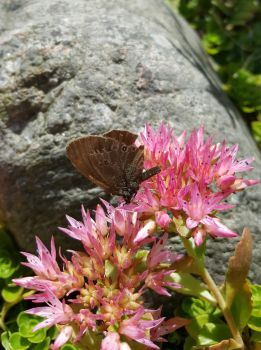 Brown pretty butterfly by TeleviCat