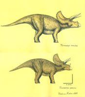 T.horridus and T.prorsus by T-PEKC