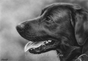 Black Labrador Retriever by Zindy