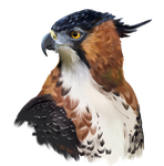 Hawk-eagle by Kajenna