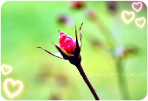 ....:::Rose bud:::.... by JAYSMILES23