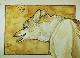 Caffinated Coyote by whitew3r3wolf