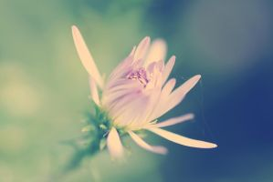 and your heart will be blossomed by Taychimono