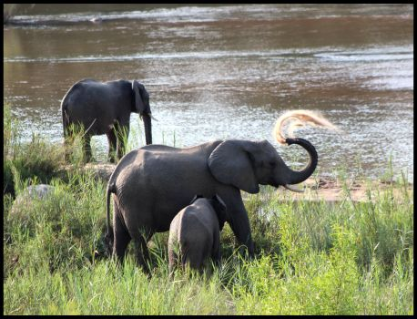 Elephants by the River by mikewilson83