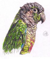 Parrot by Art-For-Our-Hearts